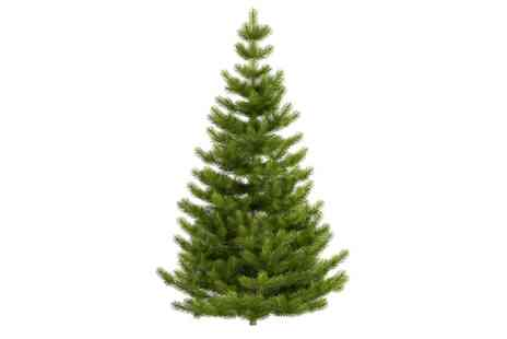 Serendipity Garden Centre - Nordman Fir Christmas Tree and Two Hot Drinks  - Save 0%