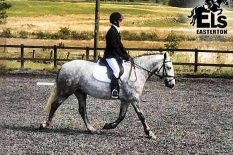 Easterton Stables - Two Horse Riding Lessons - Save 57%