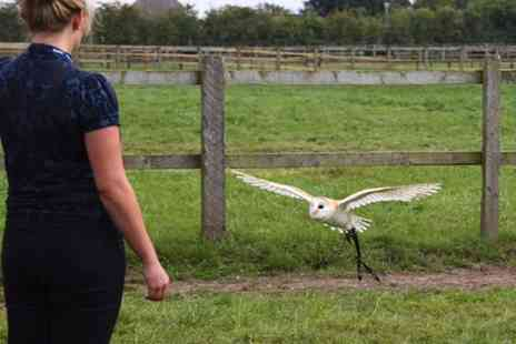 Excel Falconry - Hawk Walk and Tour of Birds of Prey Center With Photoshoot and Hot Chocolate  - Save 0%