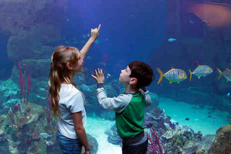 National Marine Aquarium - Santas Grotto Experience with Gift and Entry to Aquarium for One - Save 48%