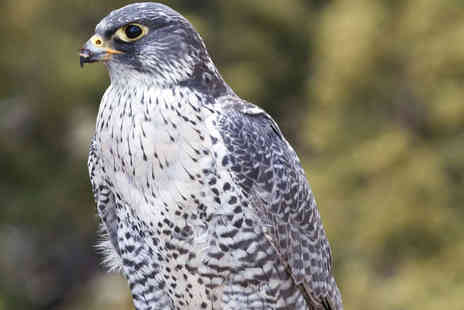 York Bird of Prey Centre - 1½- Hour Hawk Walk for One   - Save 53%