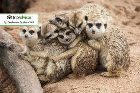 Wills Wild Animal Encounters - One hour meerkat experience for two  - Save 61%