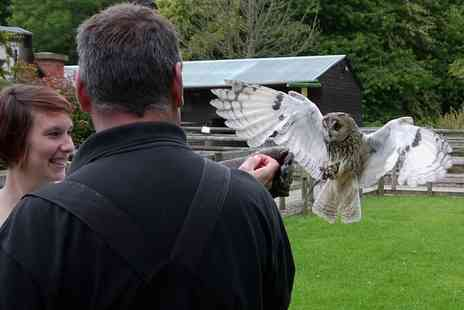 Hawksflight Falconry - One or Two Hour Owl Experience for One - Save 60%