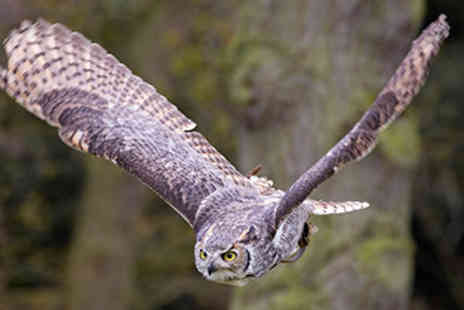 Birds of Prey - Birds of Prey Experience  -  Save 31%