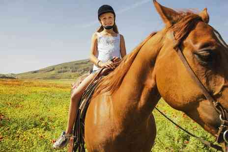 Wern Trekking and Riding Centre - Two Hour Horse Riding Trek   - Save 67%