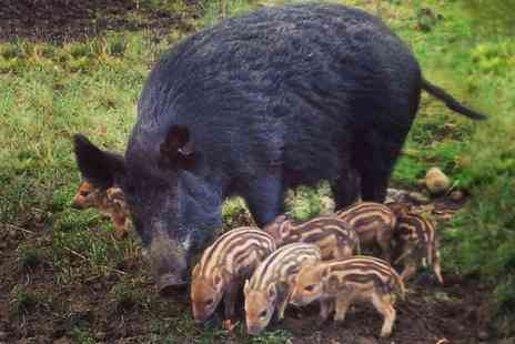 Bowland Wild Boar Park - Entry to Bowland Wild Boar Park for One  - Save 37%
