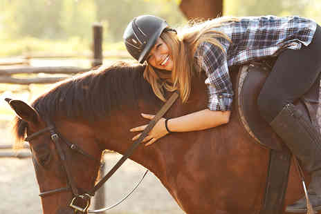 Equine Learning - Three hour horsemanship experience including a one hour trail ride and tea  - Save 48%