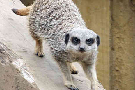 Kirkley Hall - Meerkat Experience and Entry to Kirkley Hall - Save 40%