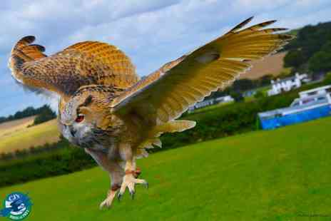 CJ's Birds of Prey - Three hour birds of prey experience including lunch for one - Save 65%