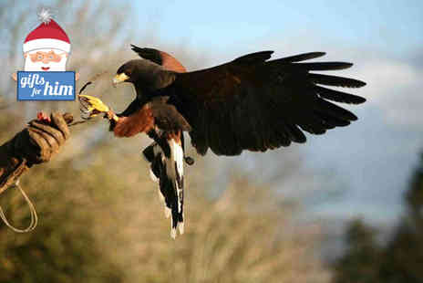 Raptor World Fife - Two hour bird of prey experience - Save 62%