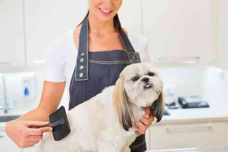 Amys Grooming Boutique - Dog Grooming Service  - Save 48%