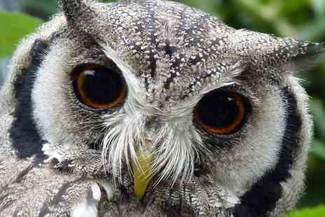 Kirkleatham Owl Centre - Twilight Owl Experience for Two - Save 51%