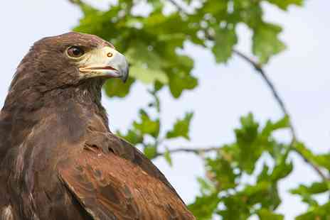 Hawkforce Falconry Experience Days - Two Hour Bird of Prey Experience for One   - Save 46%