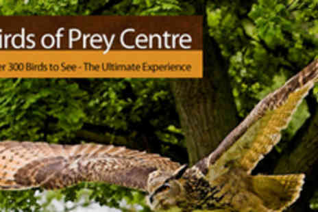 The English School Of Falconry - A Half Day Bird Of Prey Experience For The Whole Family - Save 74%