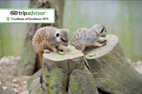 Bridlington Birds of Prey & Animal Park - Meerkat experience for one  - Save 50%