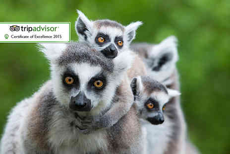 Wills Wild Animal Encounters - Half day animal keeper experience for two  - Save 61%
