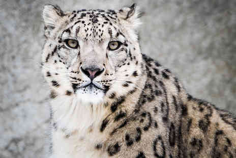 WWF - Adopt a snow leopard, polar bear or penguin including a welcome pack Plus Delivery Included  - Save 19%