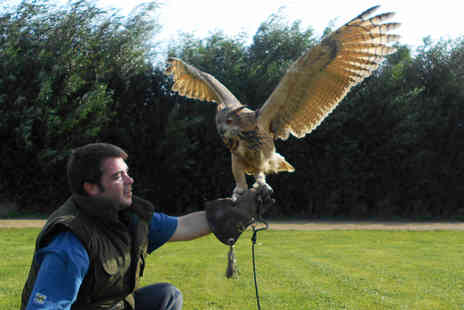 Fixter Falconry -  90 minute raptor encounter  - Save 72%