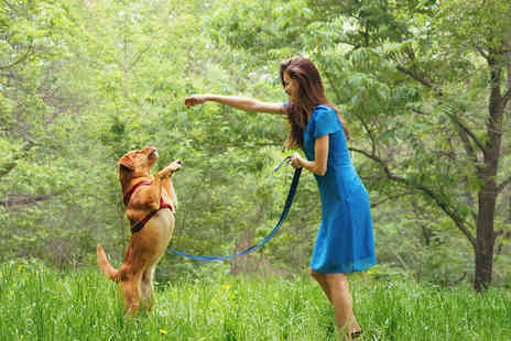 Holly & Hugo - Online accredited animal training and pet sitting course - Save 0%