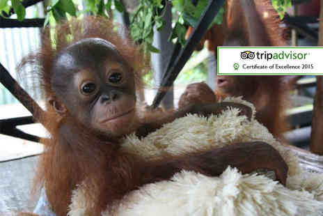 The Great Projects - Two week all inclusive Borneo orangutan, tribe and rainforest experience - Save 27%