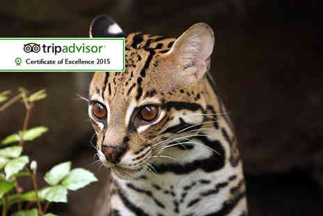 Wills Wild Animal Encounters - One hour predator experience for two - Save 70%
