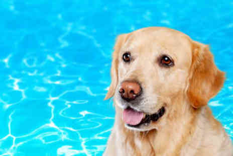 Top Dog Hydrotherapy Spa - Dog Hydrotherapy Session - Save 55%
