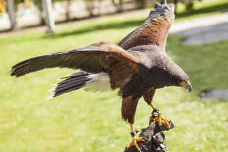 West Sussex Falconry - Three Hour Falconry Experience for Two - Save 64%