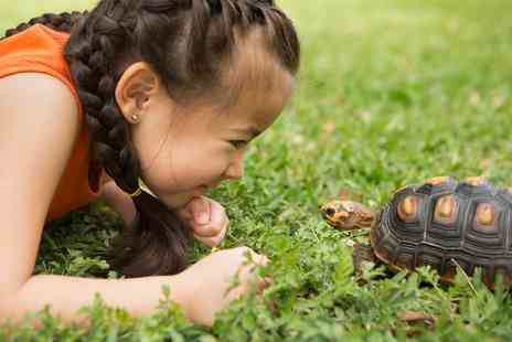 Viaduct Sanctuary and Petting Zoo - Reptile or Small Animal Experience for One or Two Children - Save 0%
