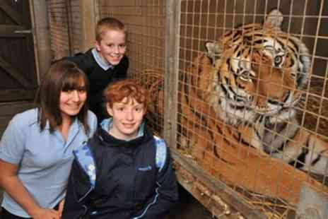 Dartmoor Zoo - Tiger Encounter   - Save 0%