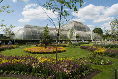 Kew Gardens - Visit to Kew Gardens and Palace with Cream Tea for Two - Save 0%