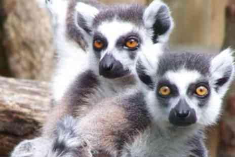 Paradise Wildlife Park - Feed the Lemurs for One - Save 0%