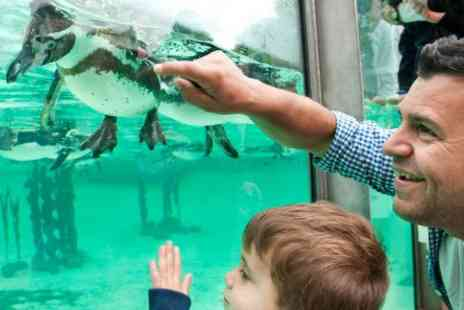 ZSL London Zoo  - Visit to ZSL London Zoo for Two Adults and Two Children - Save 0%