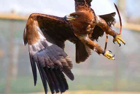 Millets Farm Falconry - Two Hour, Half Day or Full Day VIP Falconry Experience  - Save 67%
