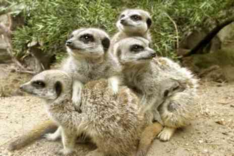 Drusillas Park - Meerkat Experience for One - Save 0%