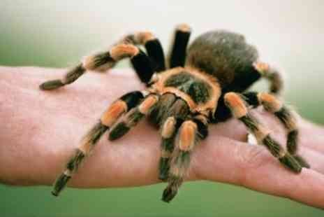 Drusillas Park - Tickle a Tarantula for One   - Save 0%