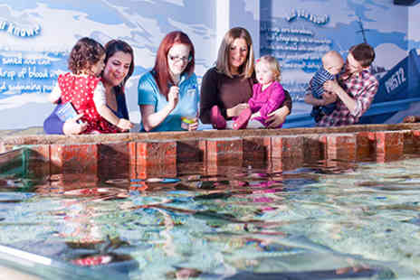 SEA LIFE - Visit to Scottish SEA LIFE Sanctuary Oban for Two Adults - Save 0%