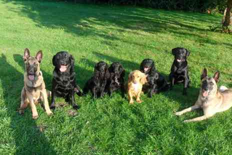 Brackenfarg Kennels - Boarding for One or Two Dogs One, Three or Seven Nights - Save 27%