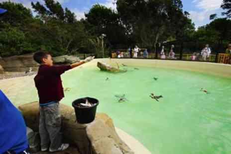 Drusillas Park  - Penguin Feeding Experience for One  - Save 0%