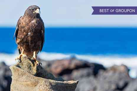 Riverside Falconry - Birds of Prey Experience for One or a Guided Hawk Walk for Up to Four - Save 58%