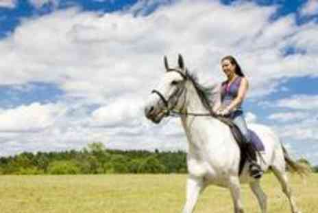Kingsbarn Equestrian Centre - Two hour horse riding lesson, trek or hack - Save 65%