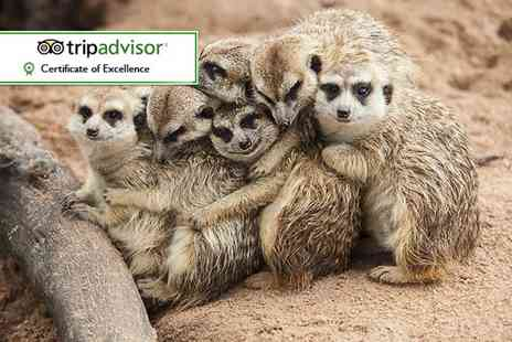Wills Wild Animal Encounters  - African encounter experience for two  - Save 65%