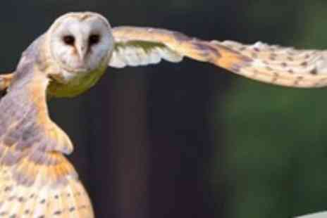 World of Owls - Family Ticket - Save 54%