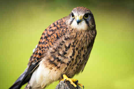 York Bird Of Prey Centre - Entry for two adults to York Bird of Prey Centre  - Save 50%