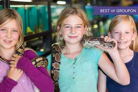 Riverside Falconry - Party with Buffet and Animal Handling for Up to 12 Kids - Save 67%