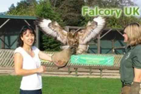 Falconry UK - Family Falconry Ticket - Save 79%