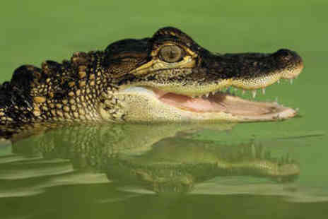 Crocs R Us - Swim, Feed, and Cuddle the Crocodiles - Save 50%