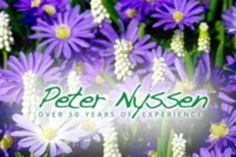 Peter Nyssen - Summer Planting Bulbs Pack of 242 Bulbs - Save 57%