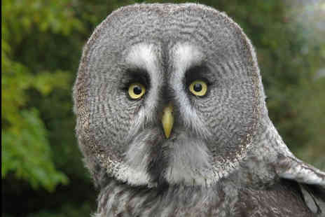 North Somerset Bird of Prey Centre - Two hour owl handling experience for one   - Save 58%