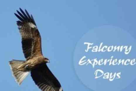 Chris Miller Falconry Experiences - Bird of Prey and Falconry Experience With Pub Lunch - Save 78%