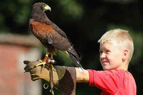 Lakeland Bird of Prey Centre - Lakeland Bird of Prey Centre Entry with a Flight Session Plus an Afternoon Tea for Two or a Family of Four - Save 0%